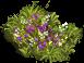 B herbs