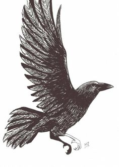 File:Raven pic (Kraar).jpg