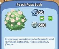 Peach-Rose-Bush