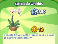 Spatacula Orchids