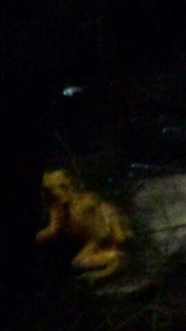 File:The Rake Or somethig spooky?.jpg