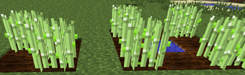 Crops Level