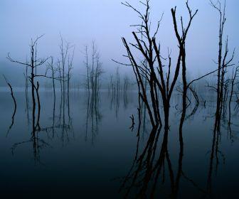 File:GreySwamps.png