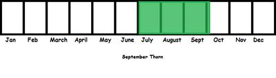September Thorn TL