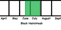Black Hairstreak