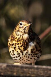 Birds.2011 820