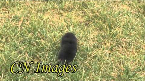The Mole, a gardeners nemesis
