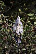 Birds.2011 1946