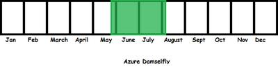 Azure Damselfly TL