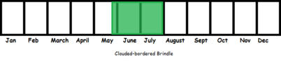 Clouded-bordered Brindle TL
