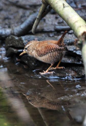 Birds.2011 688