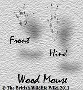 Wood mousetracks