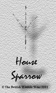 House Sparrowtracks
