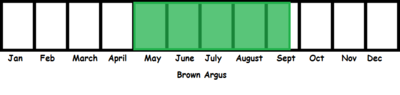 Brown Argus TL
