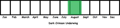 Dark Crimson Underwing TL