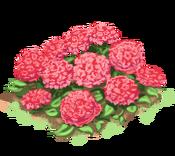 Decoration 1x1 flowergarden pink tn@2x