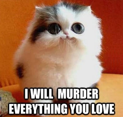 File:I-will-murder-everything-you-love-cat.jpg