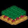 Decoration cropfield turnip1 thumbnail@2x