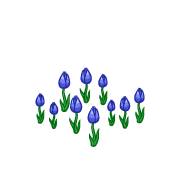 Decoration springtulips blue thumbnail@2x