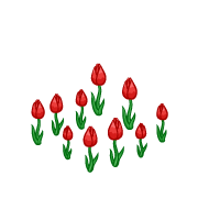 Decoration springtulips red thumbnail@2x