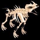 Rhino skeleton an