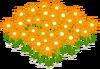 Lovely Orange Flowerbed