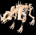 Rhino skeleton static