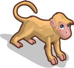 Rhesus Macaque single