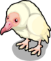 Albino Black Vulture single