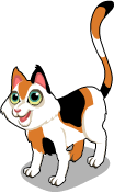 Calico cat static