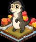 Autumn meerkat single