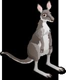 Great Gray Kangaroo single