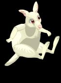 Albino kangaroo an