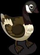 Canada Goose single