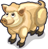 Woolly Pig single
