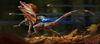 Titanfall 2 Callsign Gauntlet Runner