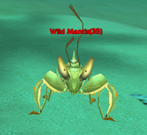 Wild Mantis