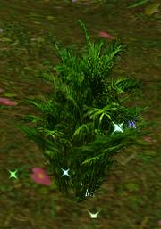 Rosemary wild