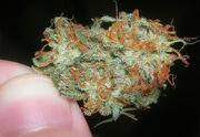 Dank Skunk Weed