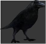 Crow thumb