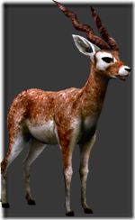 File:Blackbuck thumb.png