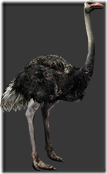 File:Ostrich thumb.png