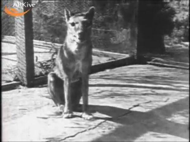 File:Tasmiane tiger.jpg