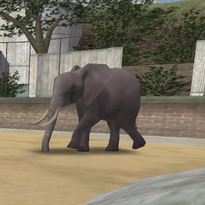 File:Animal Elephant.jpg