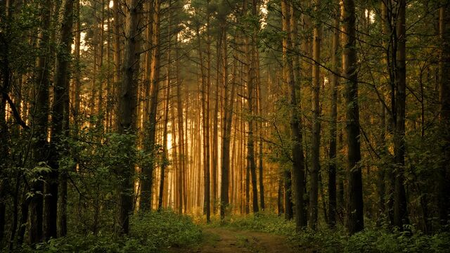 File:Falling-asleep-forest.jpg