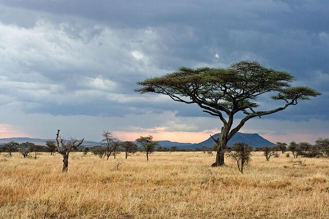 File:Serengeti.jpg