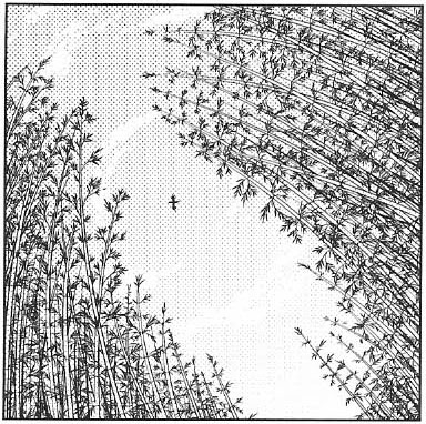 File:PMiSS bambooforest.jpg