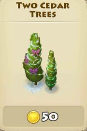 Two cedar trees winter