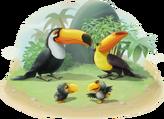 Toucan Family