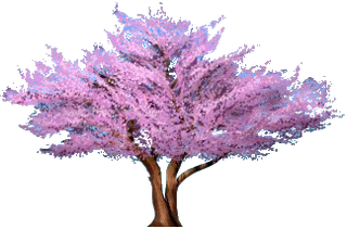 Cercis Boom.png